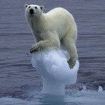 PolarBearClingingToIceberg-150x150