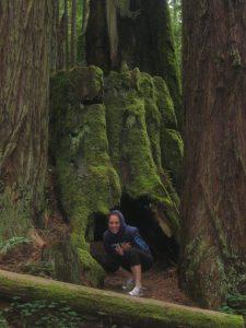 redwoods-mazzeo
