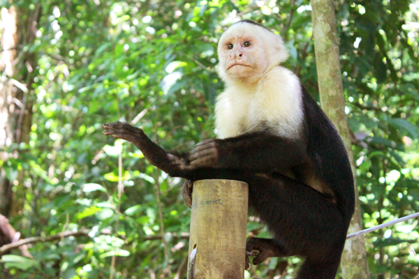 Amazon Rainforest Animals Discover Peru