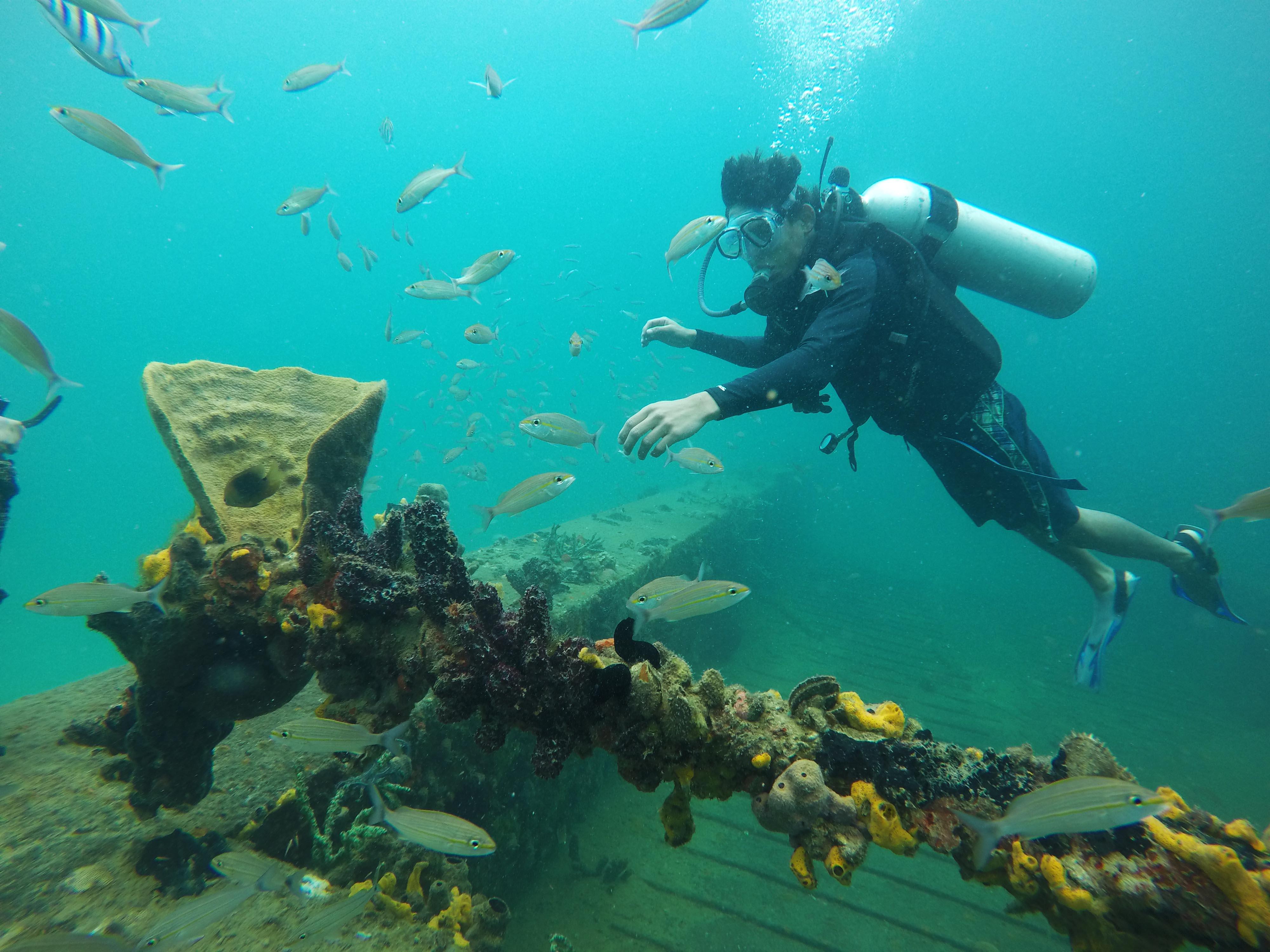 Naui Scuba Certification Dive Down To The Deep